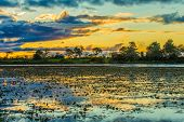 stock photo of flood  - Colorful sunset in Pantanal - JPG