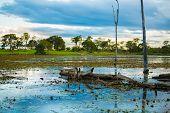 stock photo of hydroelectric  - Amazing Pantanal River  - JPG