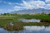 stock photo of hydrophytes  - Beautiful Lake landscape at high altitude of Leh  - JPG