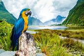 picture of blue animal  - Blue and Yellow Macaw on the nature - JPG