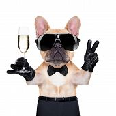 image of french toast  - french bulldog holding a glass of champagne with peace or victory fingers ready to toast isolated on white background - JPG