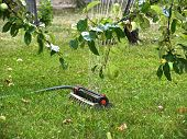 image of sprinkler  - Sprinkler under apple tree - JPG