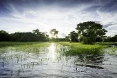 picture of wetland  - Pantanal in Mato Grosso - JPG