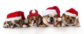 pic of puppy christmas  - christmas dog  - JPG