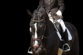 image of horse-riders  - Beautiful brown sport horse portrait isolated on black background - JPG