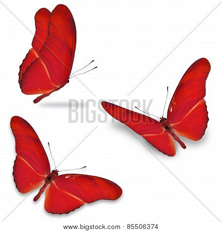 Three Red Butterfly