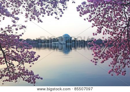 Thomas Jefferson Memorial during cherry blossom festival in Washington DC