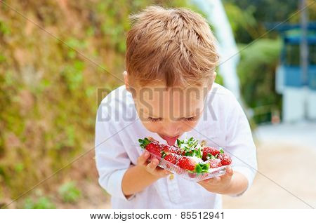 Cute Boy Tasting Yummy Fresh Strawberries In Sugar Powder