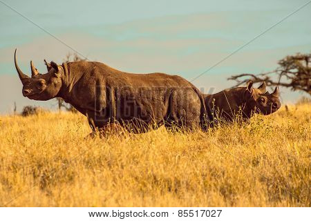 Facing North-South Black Rhino with Baby Rhino