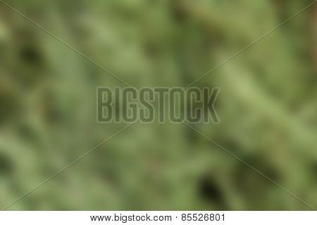 Intentional blurred background scene from vegetation
