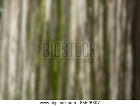 Intentional blurred background scene of moss on the bark of a tree
