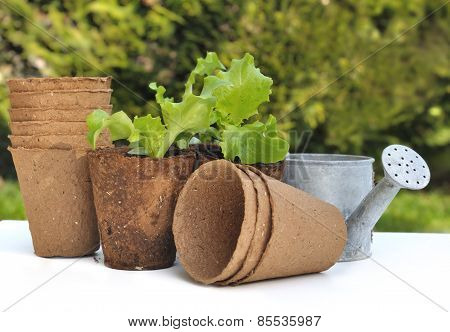 Biodegradable Pot For Seedlings