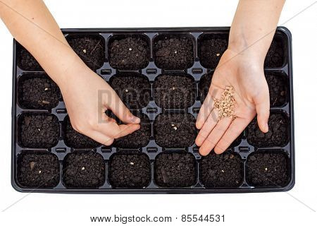Young hands sowing vegetable seeds in germination tray - growing food, isolated