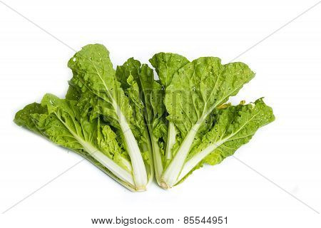 Fresh Organic Lettuce Over White Background