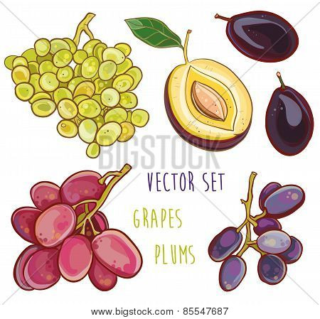 Vector Set With Plums And Grapes