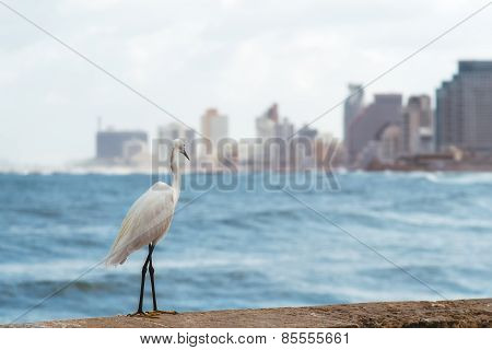 Heron on the waterfront