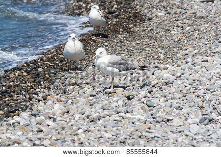 Gulls on the shore