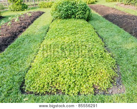 Vegetable Plots