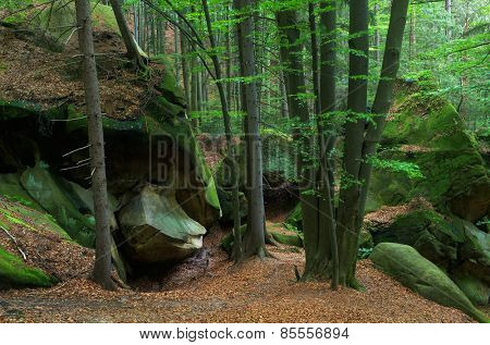 Rocks covered with moss in the forest. Spring landscape