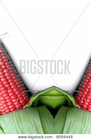 genetic modified organism