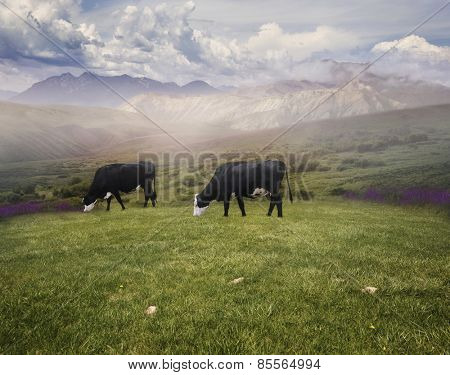 Landscape With Grazing Cows In The Early Morning