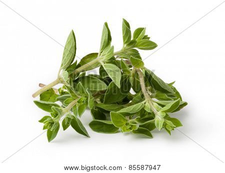 Fresh oregano isolated on white background