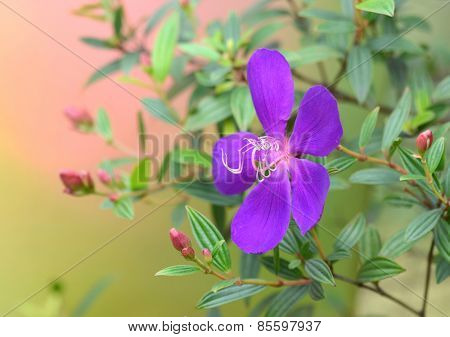 Closeup of a purple flower in full bloom