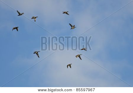 Flock Of Ducks Flying In A Blue Sky