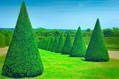 stock photo of chateau  - Conical hedges lines from Versailles Chateau - JPG