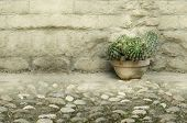 stock photo of cobblestone  - A vase of beautiful cactus on cobblestones and an old brick wall - JPG