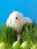 picture of chucky  - Downy easter bunny is in the thick green grass near the Easter eggs - JPG