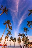 stock photo of canopy  -  Pool surrounded by palm trees on the sea beach - JPG