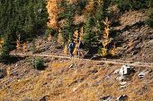 two men hiking in Canadian Rockies in autumn poster