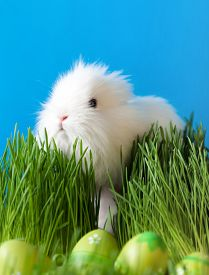 image of chucky  - Downy easter bunny is in the thick green grass near the Easter eggs - JPG