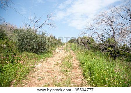 Spring Season Landscape