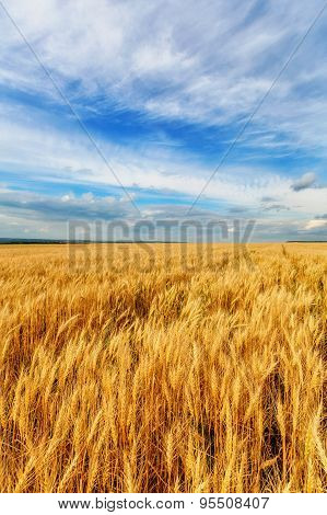 Wheat Ears And Cloudy Sky