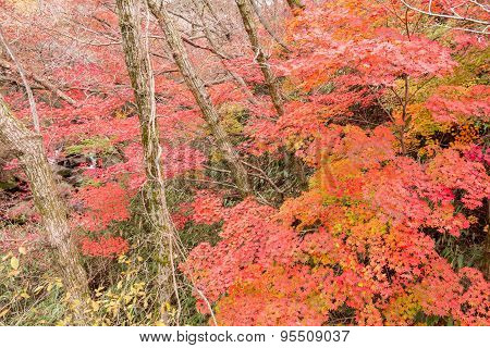 Autumn leaves in forest