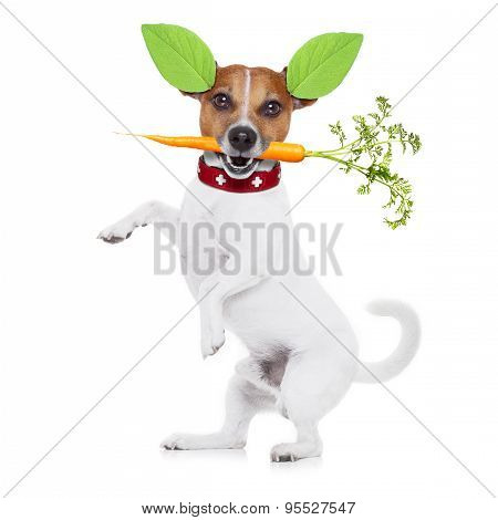 Hungry Vegan Dog