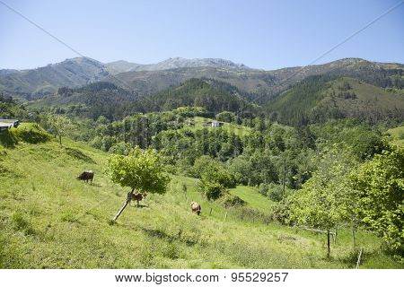 Asturian Countryside
