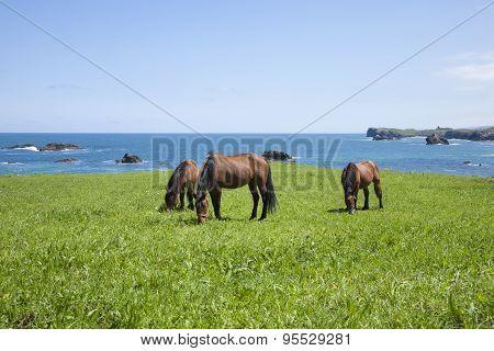 Asturian Horses