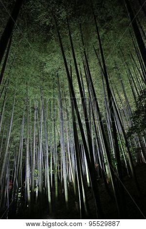 Fall Season Of Kodaiji Night  Bamboo Kyoto