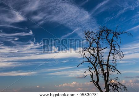 Light clouds and the dead tree