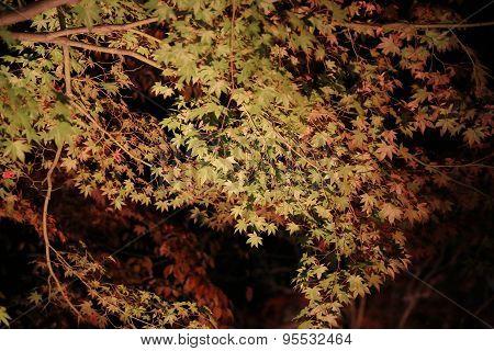 Fall Season Of Kodaiji Night