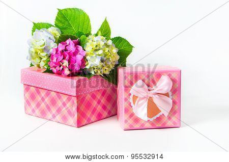 Hydrangea Flowers And Gift Box
