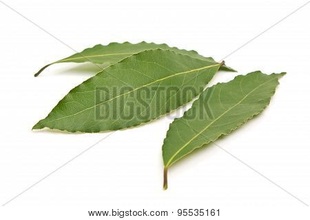 Fresh Bay Leaves Isolated On White Background