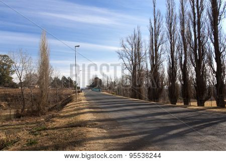 Rural Street Lined With Tall Brown Leafless Trees