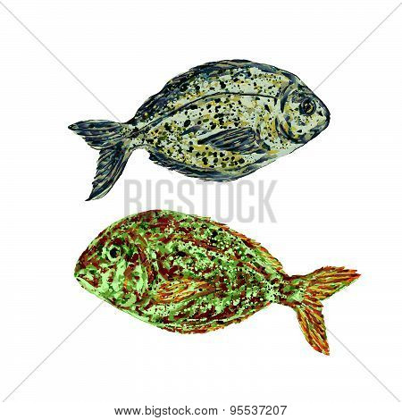 fish vector.drawing of a fish. dorado