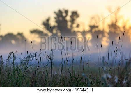 grass in morning fog on summer meadow