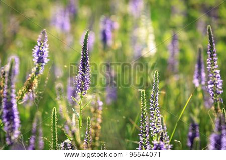 summer flowers on meadow, photo with shallow DOF