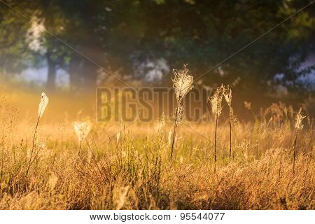 Grass with web on morning meadow